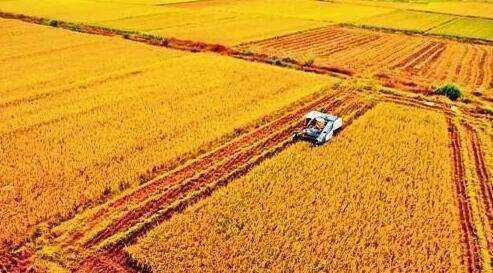 粮食生产不能松劲(政策解读·聚焦中央一号文件①)