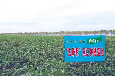 黑龙江省明水县提出 做大主导产业让黑豆生金