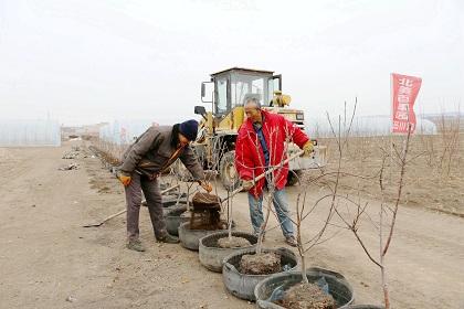 """黑龙江农垦佳南实验农场打造""""北美百果园"""""""