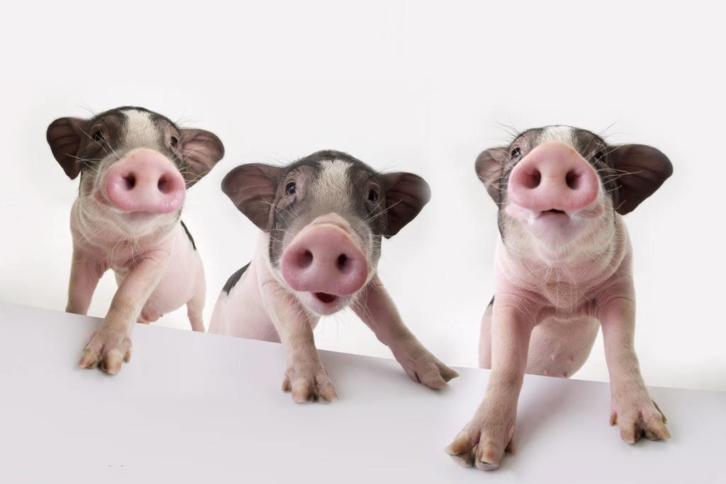 《浙江省人民政府办公厅关于进一步促进生猪生产保障市场供应的通知》 政策解读