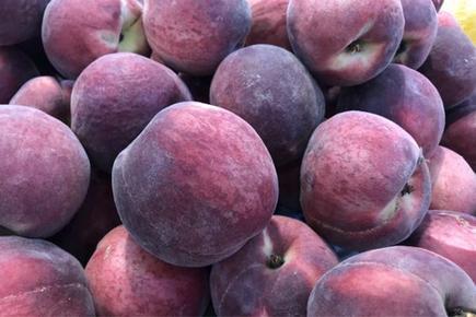 未成熟的桃子和桃仁有毒?
