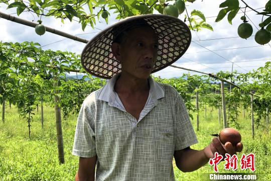 """江西寻乌扶贫见闻:产业扶贫""""多点开花""""结""""硕果"""""""