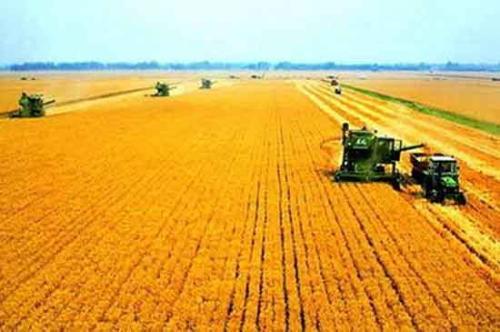 70年来全国粮食总产量增长4.8倍