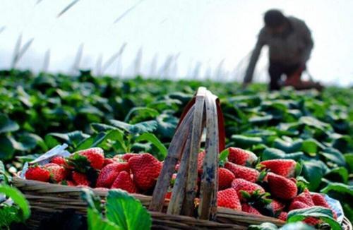 广西出台方案促贫困地区农产品营销