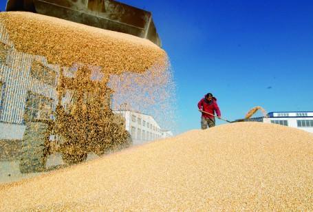 为近14亿人粮食安全保驾护航——体制机制创新完善夯实我国粮食安全根基
