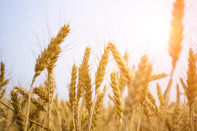 农民组成联合体闯市场订单生产 这样种地有赚头