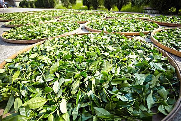 我国茶叶进出口贸易现状如何