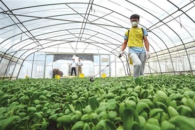 上海市新型职业农民职业技能大赛(蔬菜行业赛区)举办 以赛代练 提升蔬菜行业新技术新产品应用水平