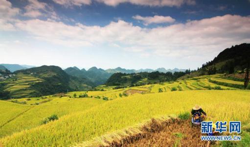 江西启动早籼稻最低收购价收购
