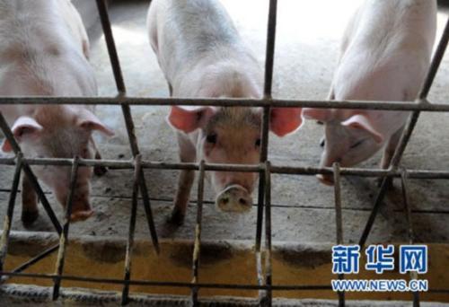 全力以赴保生产供应 千方百计稳猪肉价格——五问猪肉价格