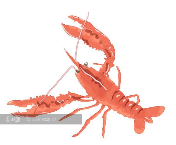 """""""超级虾""""可丰富人类餐桌并控制疾病暴发"""