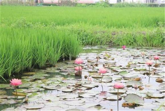 松江区文华村农业发展新模式