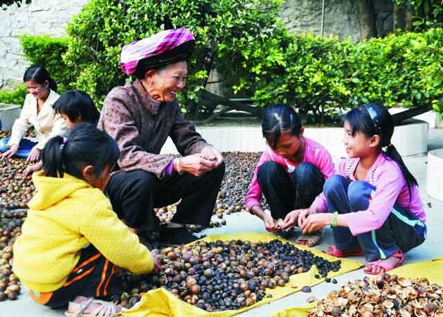5亩油茶可让一户家庭稳定脱贫 山茶油绘就广西乡村振兴图景