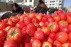 新疆番茄制品销往世界100多个国家和地区