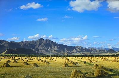 粮食储备局:我国粮食储备能够满足市场供应和应急需要