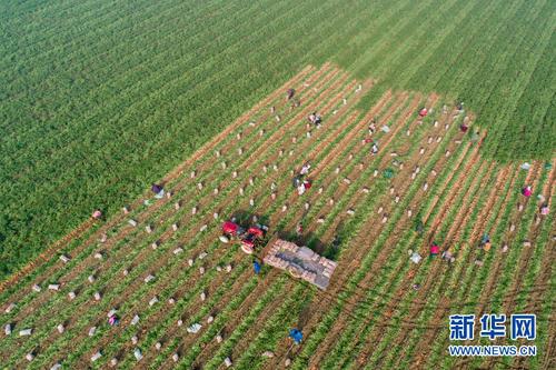 """秦皇岛:智慧农业让农民不再""""靠天吃饭"""""""