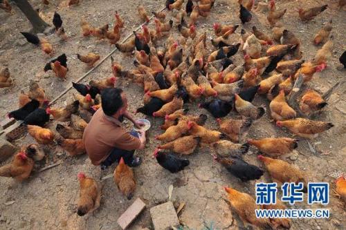 """迷你""""产业园""""让南疆农民月月有收入"""