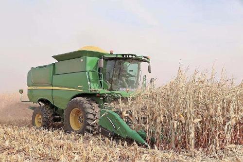 机械粒收玉米亩产超1100公斤