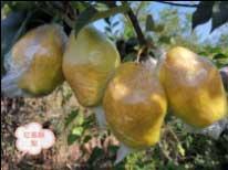 情暖冬日——第一届精准助农安全绿色食品社区行