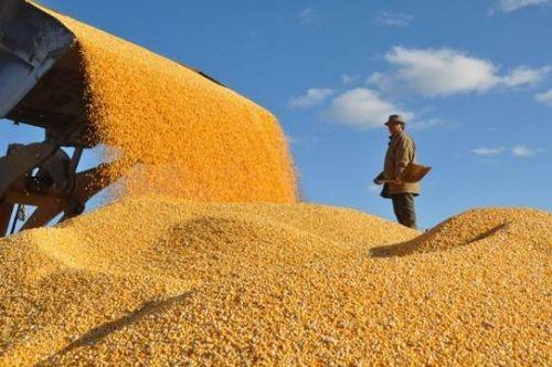 实施粮食安全战略需多维发力