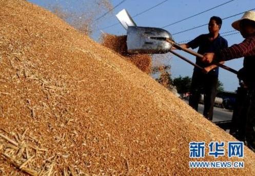 以良法促善治 为粮食安全保驾护航