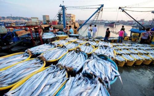 我国正加快渔业法修订 推进水产养殖业绿色发展